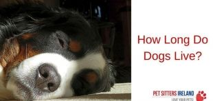 How Long Do Dogs Live?