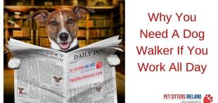 Why You Need A Dog Walker If You Work All Day