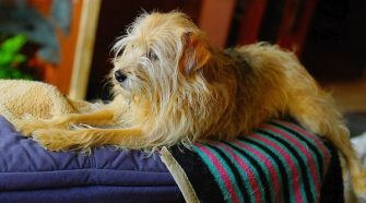 What Is A Pet Sitter?