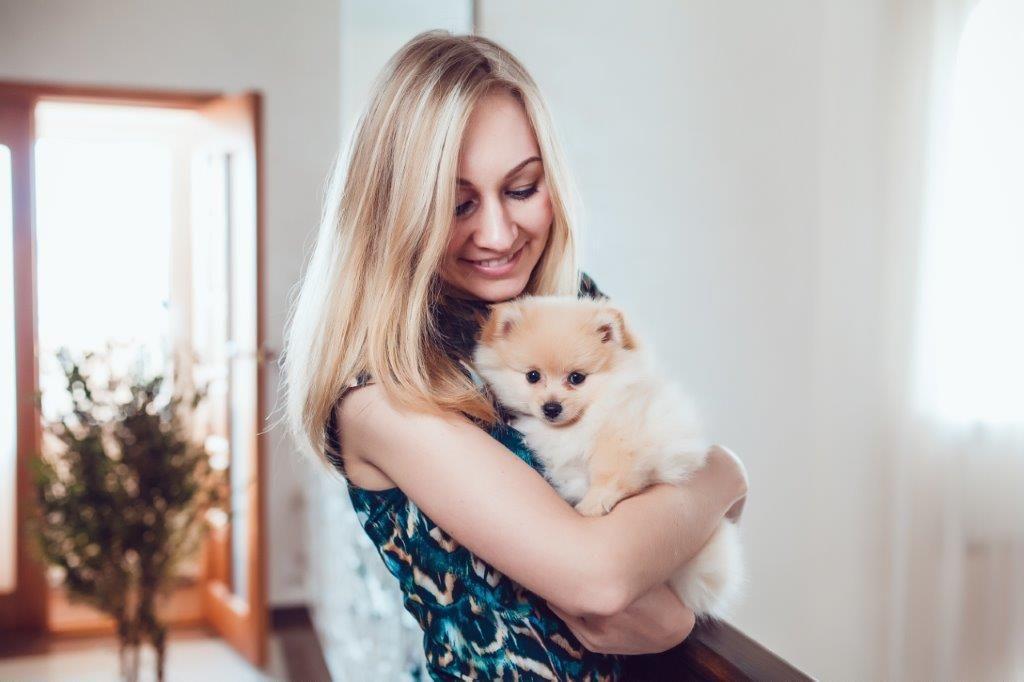 how to become a pet sitter pet minder dog walker