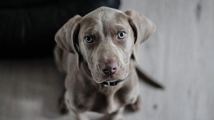 Dog Theft Ireland