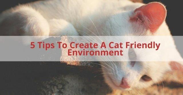 Cat Friendly Environment