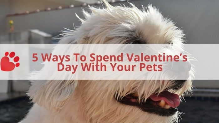Valentine's Day Pet