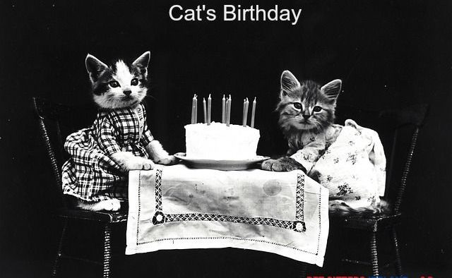 5 Memorable Ways to Celebrate Your Cat's Birthday