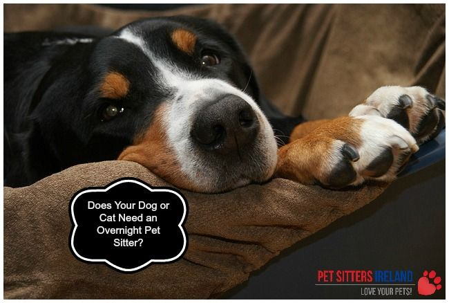 Does Your Dog or Cat Need an Overnight Pet Sitter?