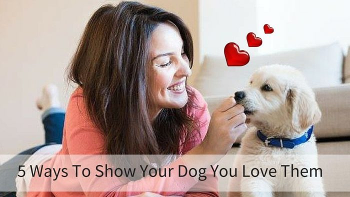 5 Ways To Show Your Dog You Love Them