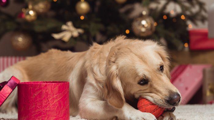 Christmas Pet Sitter