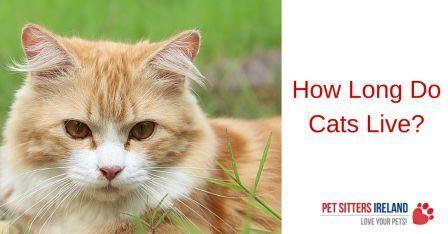 scoop away cat litter walmart