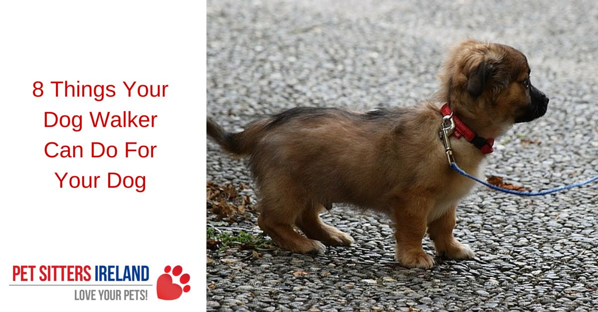 8 Things Your Dog Walker Can Do For Your