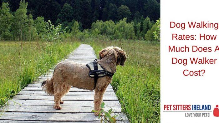 Pet Sitters Ireland Blog Pet Facts Pet News Tips And
