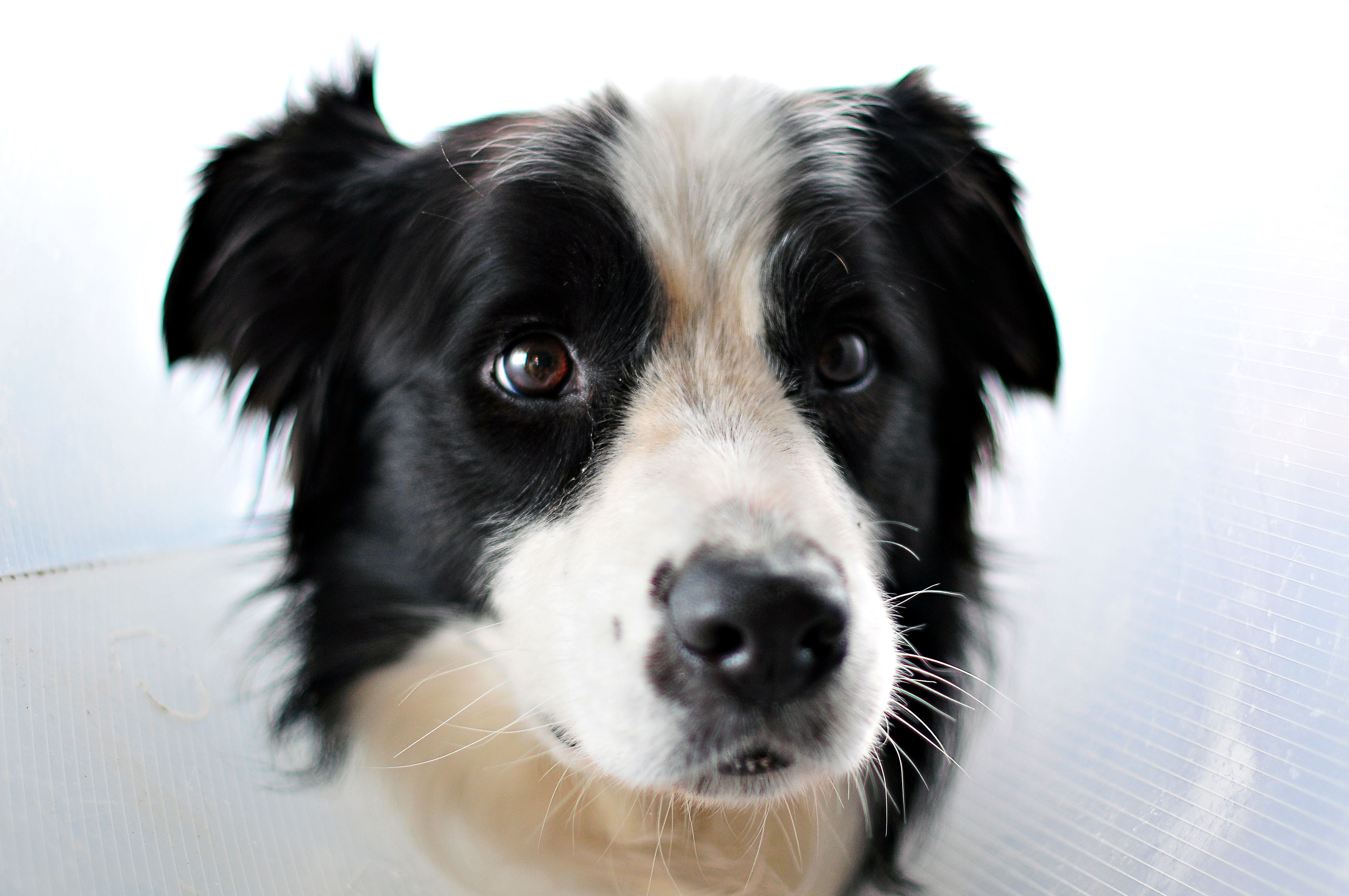 dog therapy register dogs pet tv service animal pets registration licenses irish names valentine doggy close valentines photographs replays clues