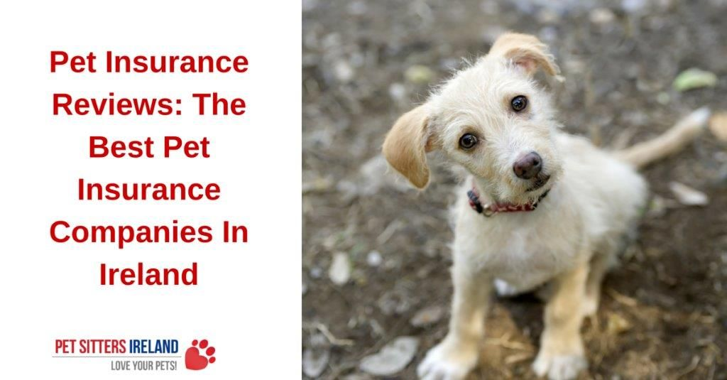Best Wedding Insurance Ireland: The Best Pet Insurance Companies In Ireland (Reviews
