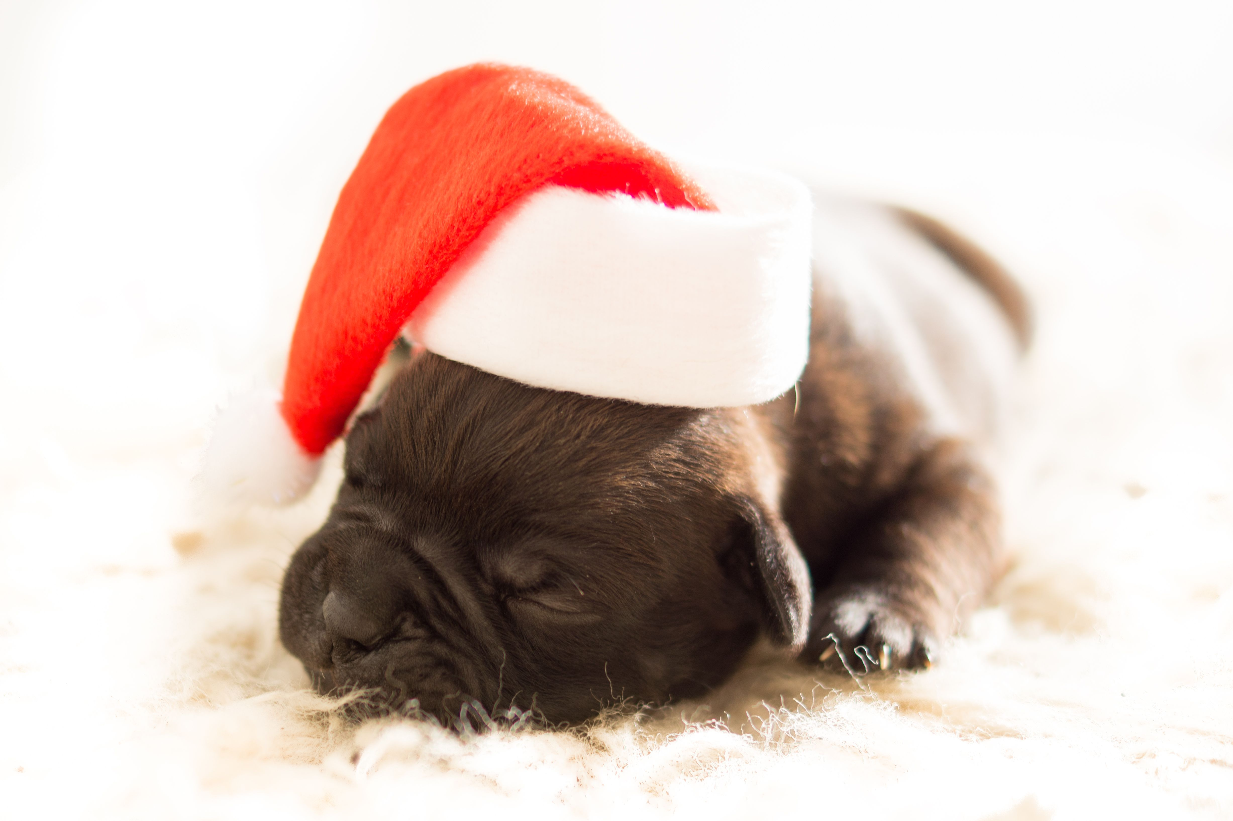 5 Gifts To Buy Your Dog This Christmas | Pet Sitters Ireland | Pet ...