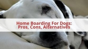 Home Boarding For Dogs