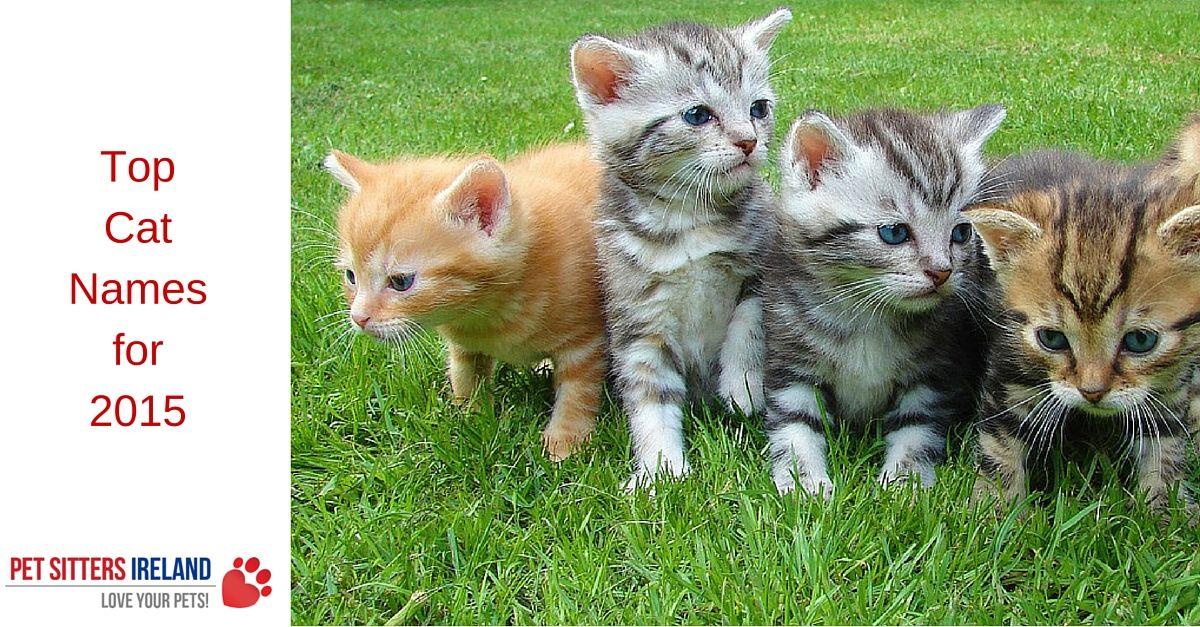 Most Popular Cat Names Top Cat Names Of 2015 Pet Sitters Ireland