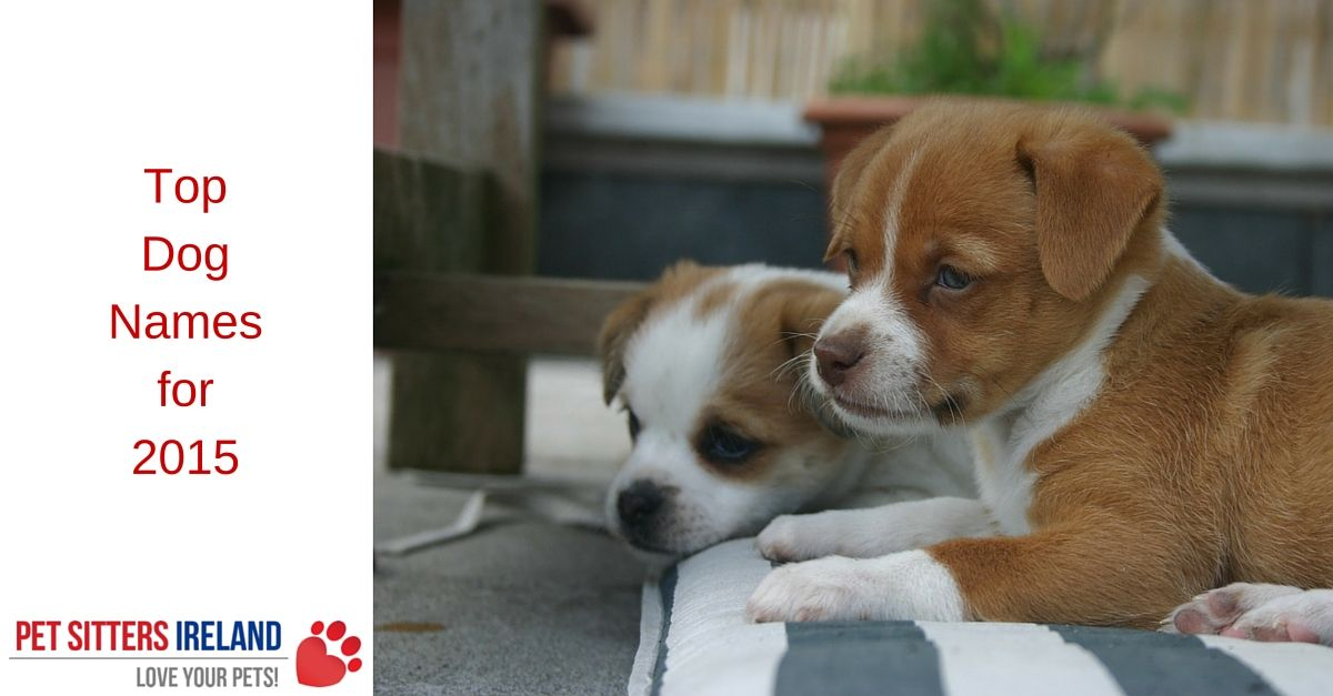most popular dog names top dog names of 2015 pet With top dog sitters