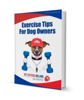 Exercise Tips For Dog Owners