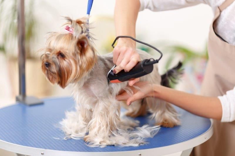 Mobile Dog Grooming Prices