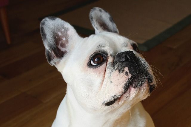 All About Doggy Day Care: Pros, Cons, Benefits, Cost and More