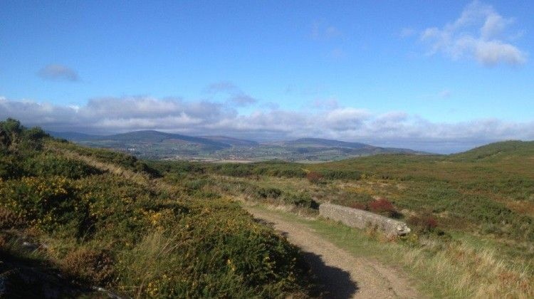 5 Best Places To Walk Your Dog In Wicklow