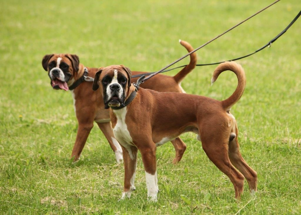 Tips For Keeping Your Dog Safe On A Dog Walk