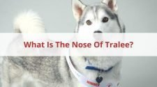 What Is The Nose Of Tralee
