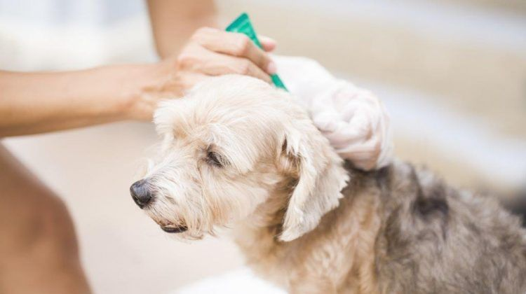 Lyme Disease in Dogs: Facts, Symptoms and Prevention