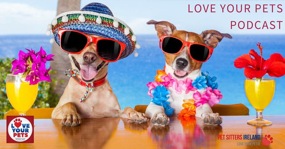 How To Keep Your Pets Cool In The Hot Weather