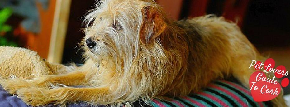 Cork Dog Boarding Kennels