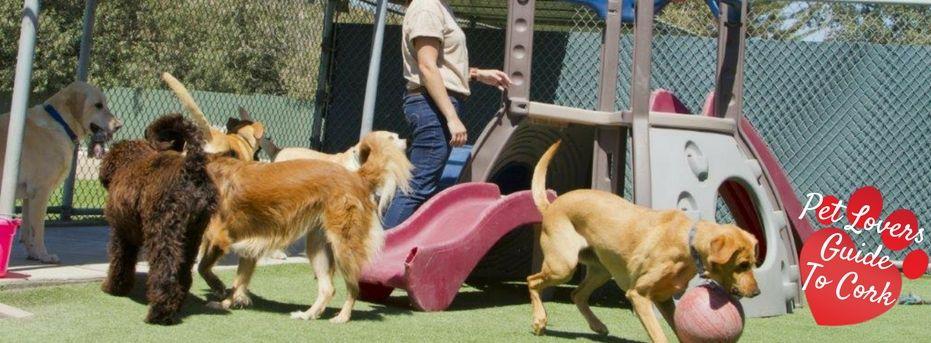 Cork Doggie Day Care