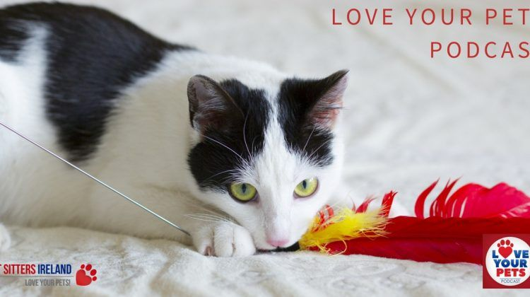 how to show your cat love