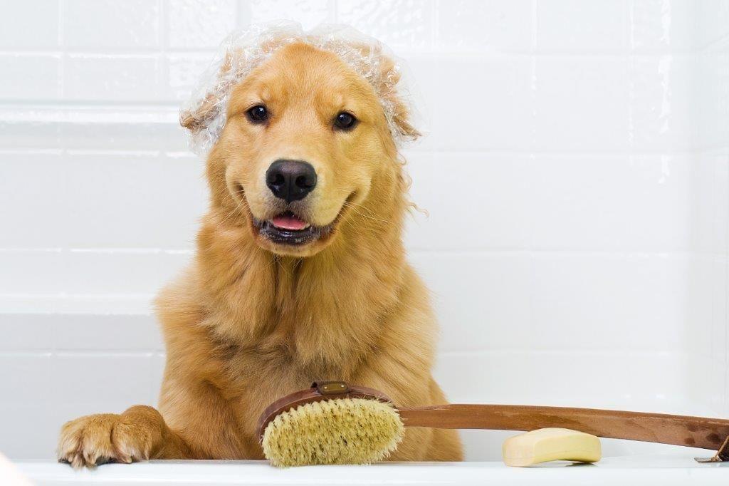 Dog Grooming Kildare