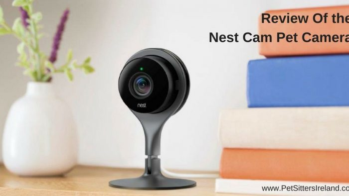 Review Of Nest Cam