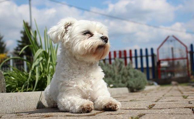 Best Dog Walkers Dublin