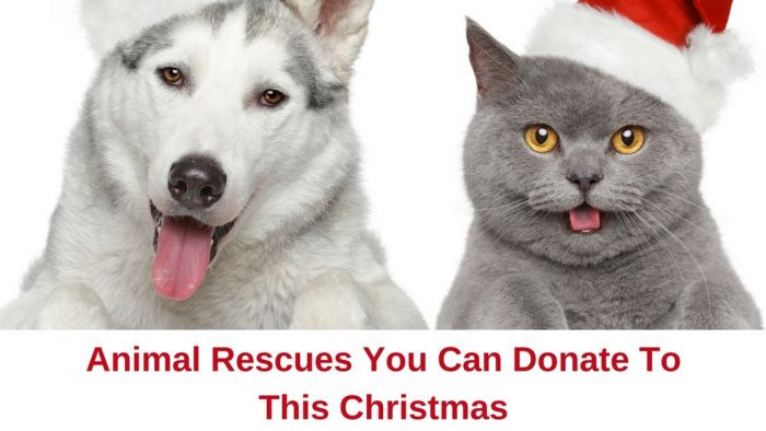 animal rescues