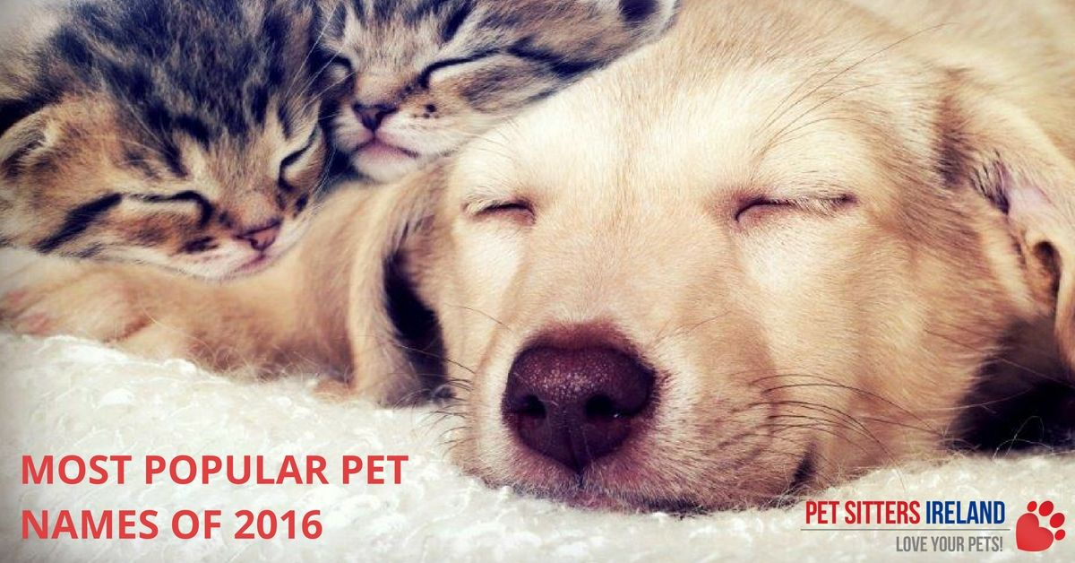 Most Popular Pet Names Of 2016