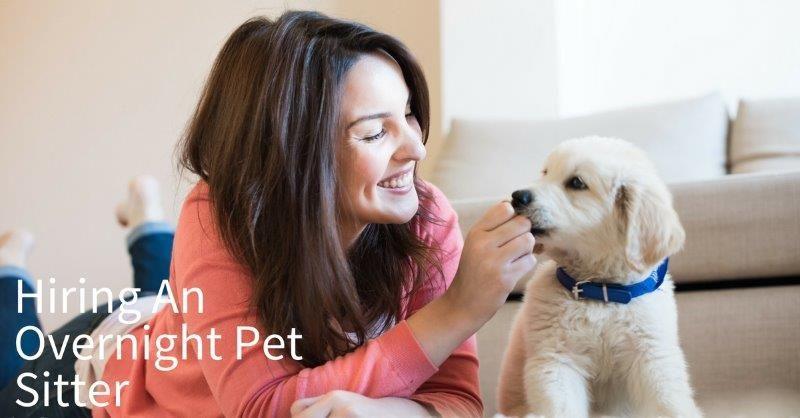 overnight-pet-sitter