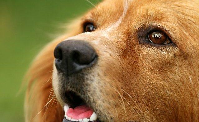 Wexford Pet Sitter