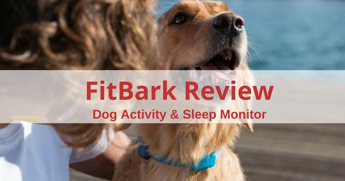 fitbark-activty-monitor-review