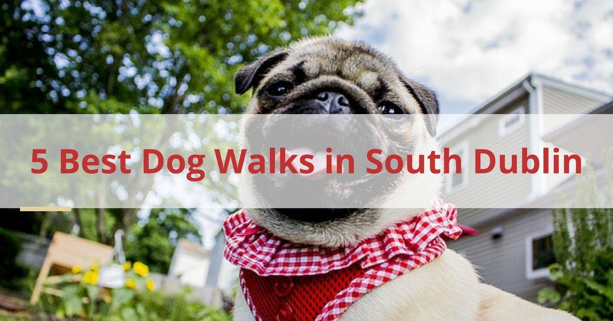 5 Best Dog Walks in South Dublin