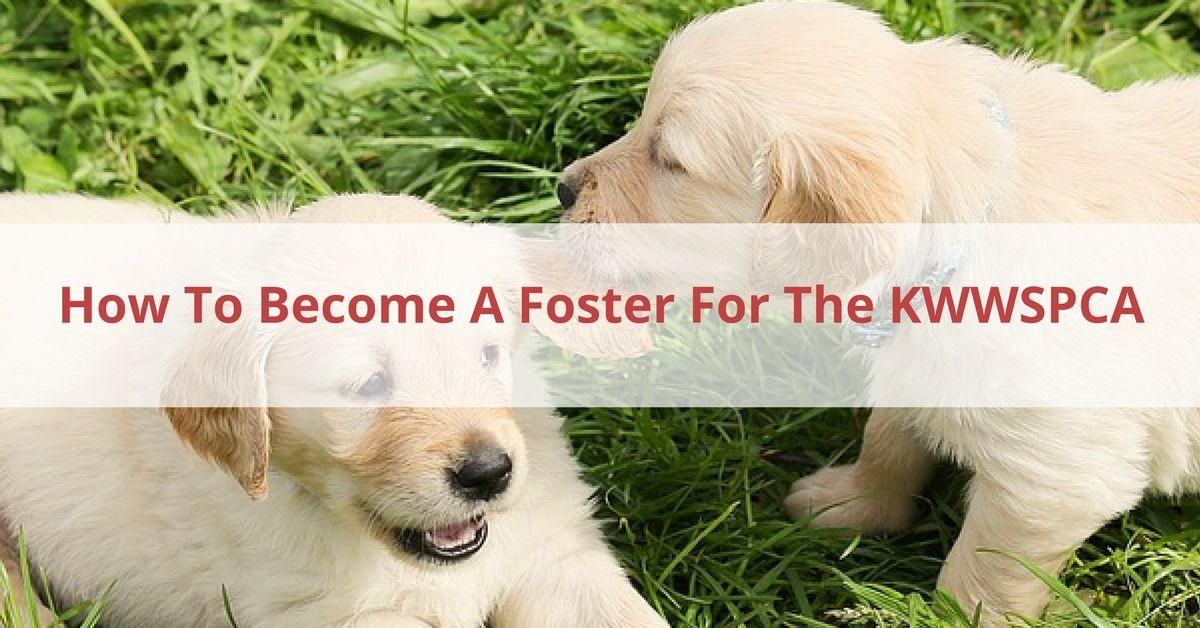 Foster KWWSPCA