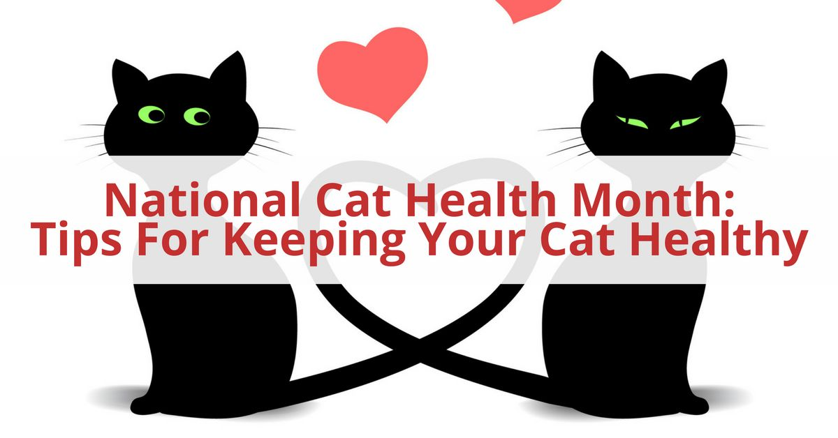 National Cat Health Month