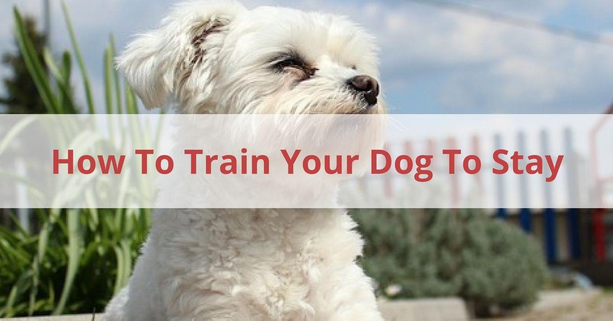 Train Dog To Stay