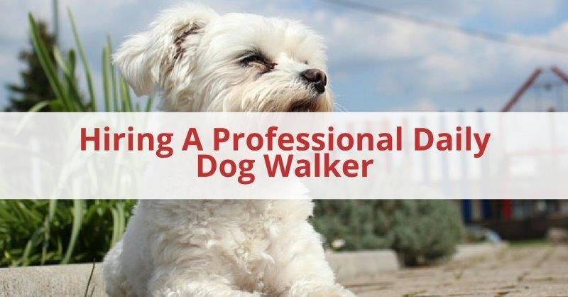 Daily Dog Walker