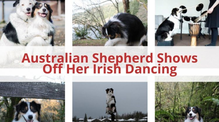 Irish Dancing Dog