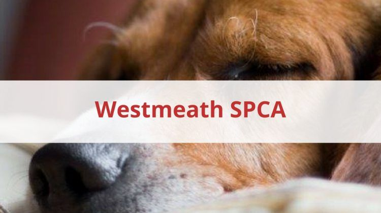 Westmeath SPCA