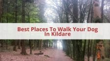 Best Places To Walk Your Dog In Kildare