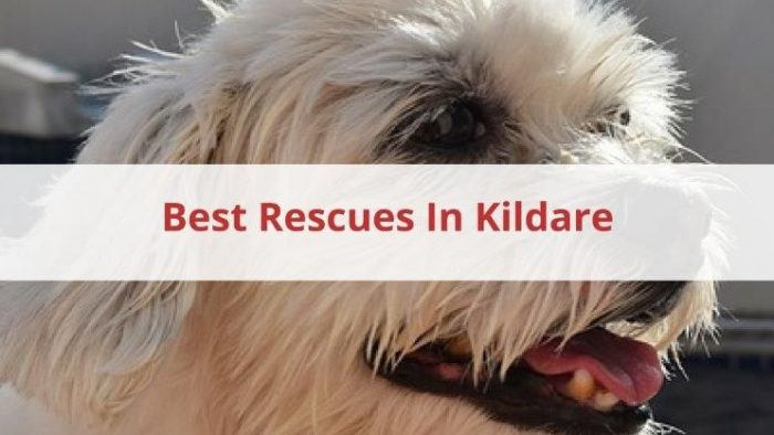 Best Rescue In Kildare