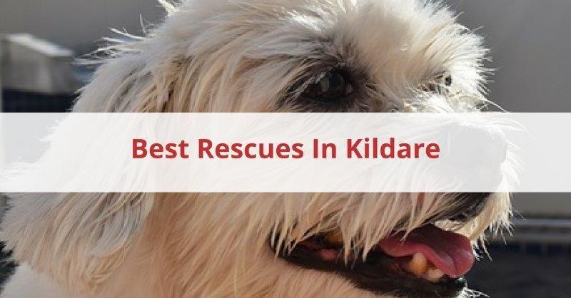 Best Rescue In Kildare