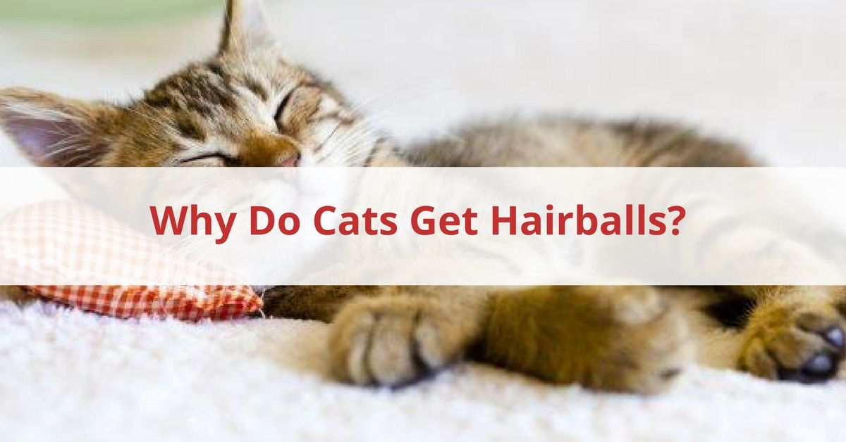 Cat Hairball